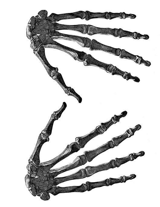 Skeleton Hands for T-shirt